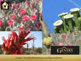 Phoenix Living: The Desert in Bloom – Another Reason People Love Life in the West Valley