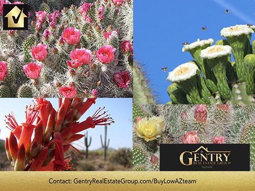 Phoenix Desert in bloom: